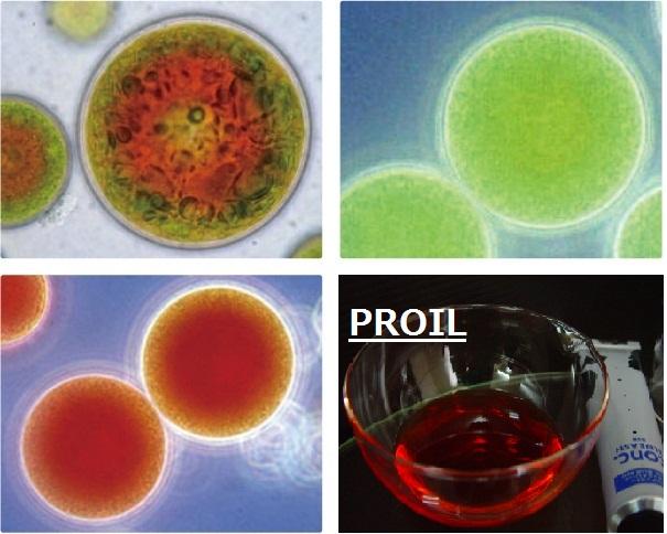 ヘアオイルのPROILに使用する抗酸化カロテノイド